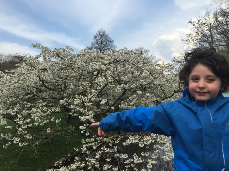 Holland Tulip Season